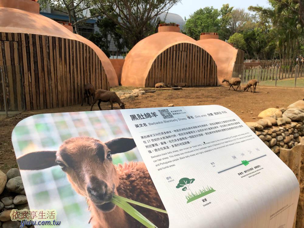 新竹市立動物園黑肚綿羊