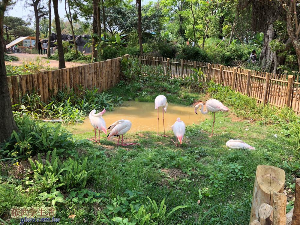 新竹市立動物園大紅鶴