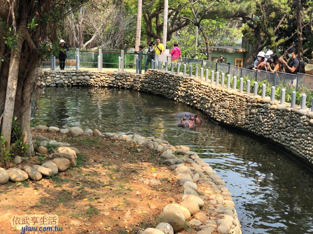 新竹市立動物園河馬樂樂