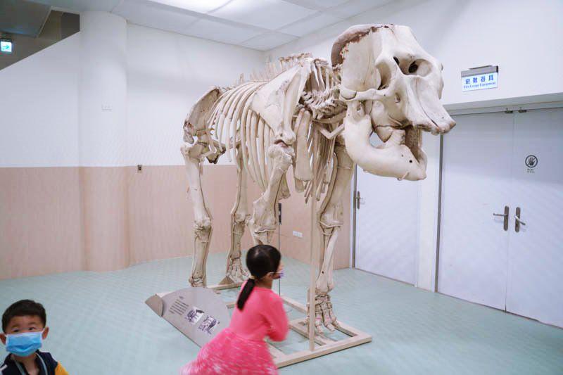 新竹動物園圖書館大象綾子標本