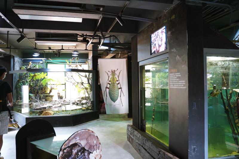 新竹台灣昆蟲館內部