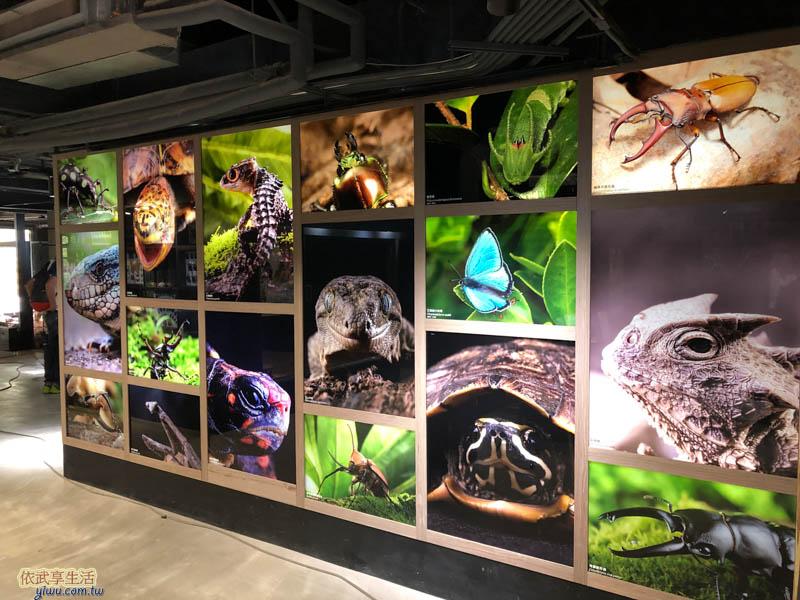 新竹台灣昆蟲館展示牆
