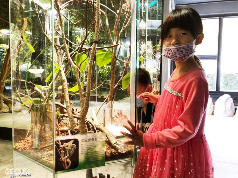 新竹台灣昆蟲館昆蟲的觀察箱