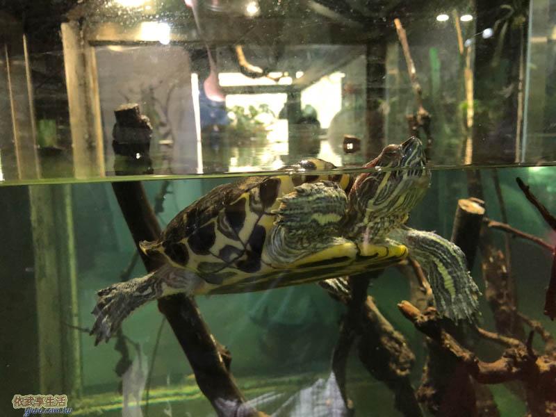 新竹台灣昆蟲館烏龜