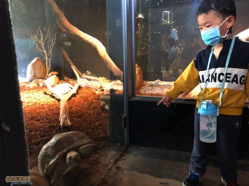 新竹台灣昆蟲館陸龜跟蜥蜴