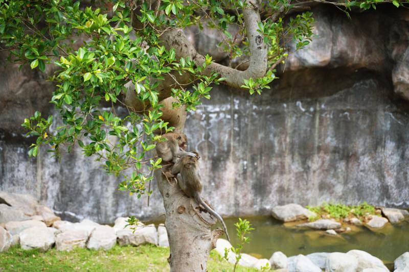 新竹昆蟲館出入口對面的透明玻璃看到的猴子