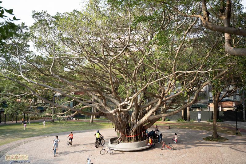 長和公園大榕樹