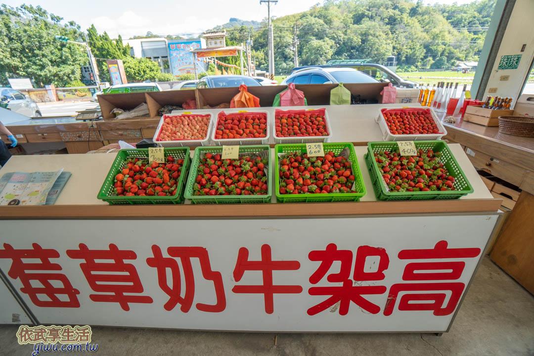 大湖採草莓推薦