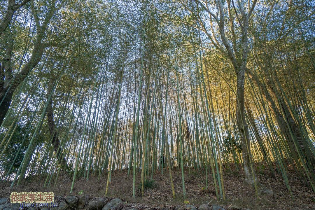 天空之城竹林步道