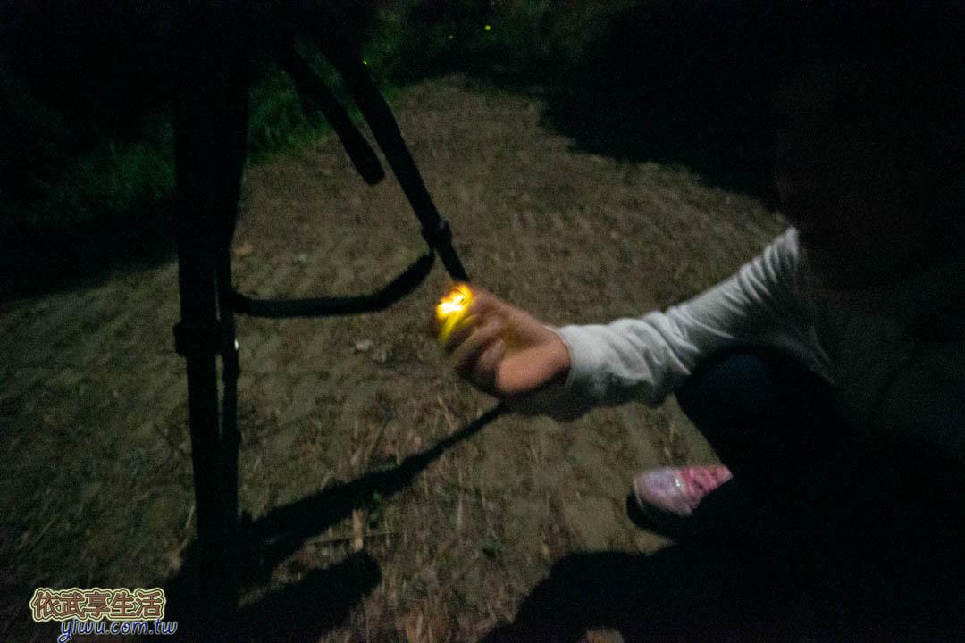 苗栗民宿螢火蟲