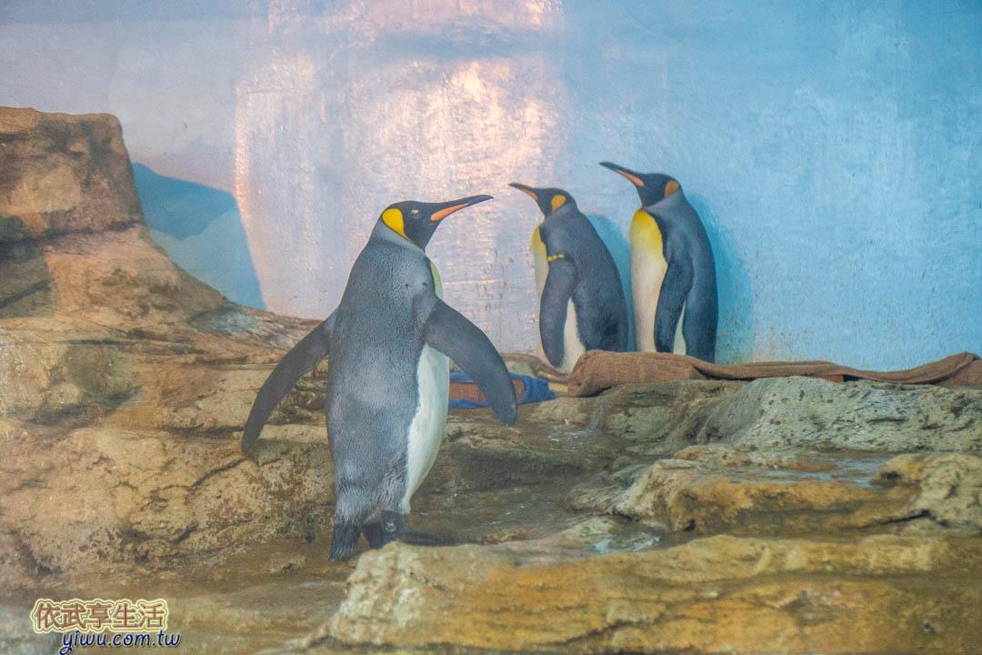 Xpark企鵝奇遇區